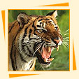 Wildlife Parks in India